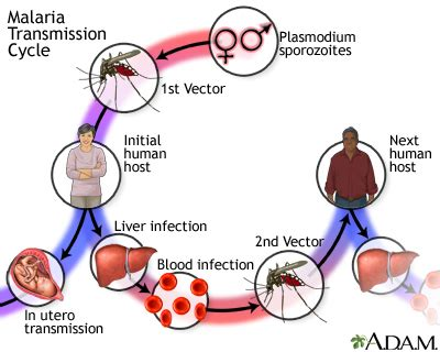 Malaria in pregnancy literature reviews
